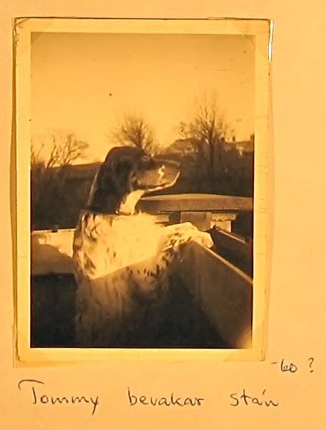 Fotoalbum-1-005-asf[1]